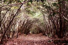 Cea mai bântuită pădure din lume.  Ce se ascunde printre copaci?