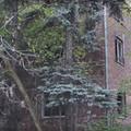 Nawiedzony dom w Myszkowie