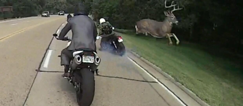 Co zrobić gdy zderzysz się ze zwierzęciem na drodze?