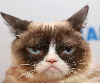 Kot Grumpy