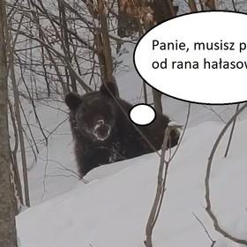 """""""Grzesiu, czego ty nie śpisz?"""". Niedźwiedź zaskoczył leśniczego"""
