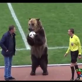 Niedźwiedź rozpoczął mecz piłki nożnej między zespołami 3. ligi rosyjskiej