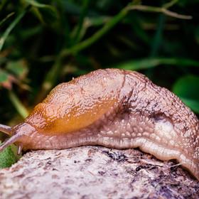 Nastolatek zjadł ślimaka. Został sparaliżowany i zmarł