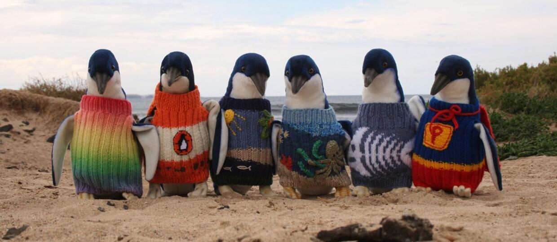 Foto: Victoria's Phillip Island Penguin Foundation