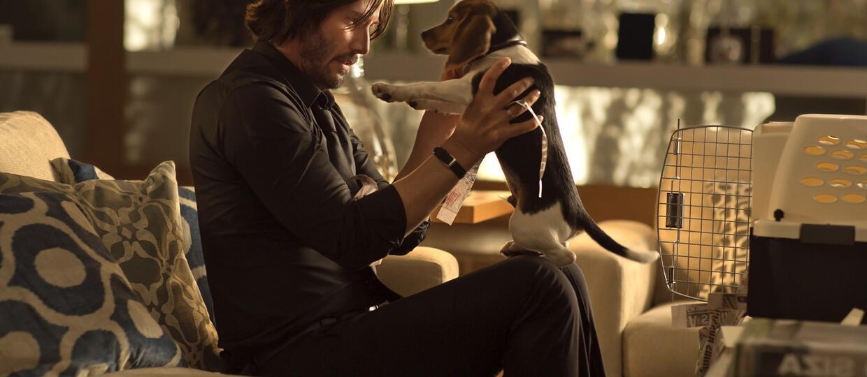 10 filmowych twardzieli i ich psy