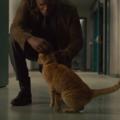 """Czym tak naprawdę jest kot z filmu """"Kapitan Marvel""""?"""