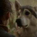 """Fani """"Gry o tron"""" kupują psy husky, a potem je porzucają"""