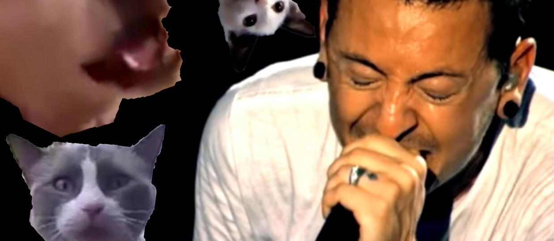 """""""Given Up"""" Linkin Park w zwierzęcym coverze"""