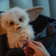 Gremliny powracają w fanowskim filmie stworzonym za pomocą marionetek