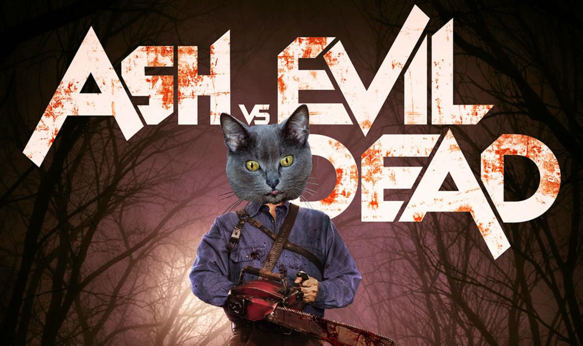 """Kot jako Ash z """"Martwego zła"""""""