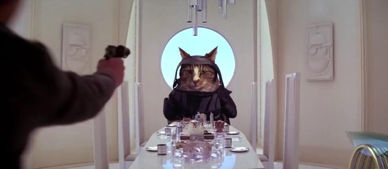 Koty w scenach ze znanych filmów