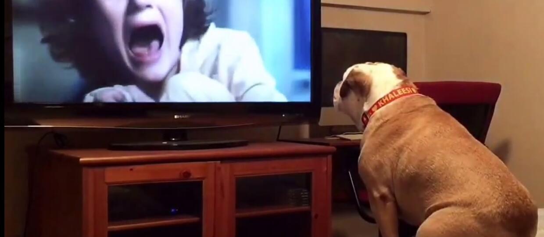 """Niezwykłe zachowanie psa podczas oglądania horroru """"Obecność"""""""