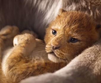 """Nowy """"Król Lew"""" to film aktorski czy animacja? Jak zadecydowali czołowi amerykańscy animatorzy?"""