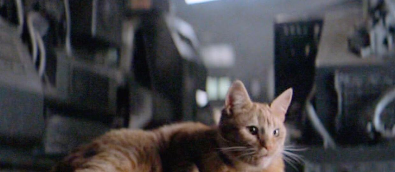 """Powstał spin-off o... kocie z """"Obcego"""""""