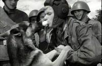 "Kadr z serialu ""Czterej pancerni i pies"", foto: INPLUS/East News"