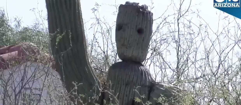 kaktus Groot