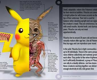 Pokenatomy, Pikachu, Pokemon