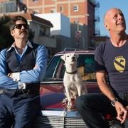 """Bruce Willis i jego pies wiedzą """"Jak dogryźć mafii"""" na zdjęciach z filmu"""