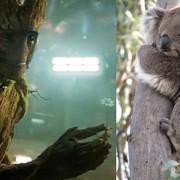 "Foto: kadr z filmu ""Straznicy Galaktyki""/ Marvel Studios/ Disney; Steve Ross/Capital Pictures/EAST NEWS"