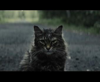 """Zmarł kot, który grał Churcha w """"Smętarzu dla zwierzaków"""""""