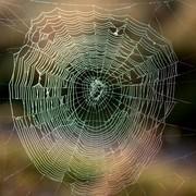 """Ten horror zmrozi krew w żyłach arachnofobom. Poznajcie """"Abyssal Spider"""", film o podwodnych pająkach"""