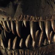 Szczęki tyranozaura