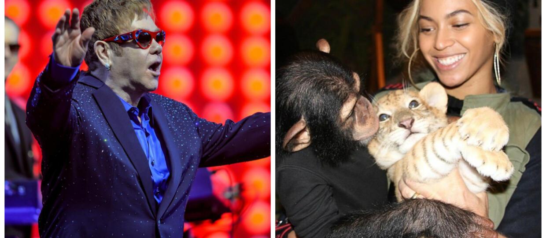 """Obsada """"Króla Lwa"""" się powiększa. Beyonce wystąpi jako Nala i... Elton John?"""
