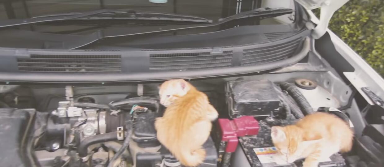 Nissan – marka przyjazna kotom?