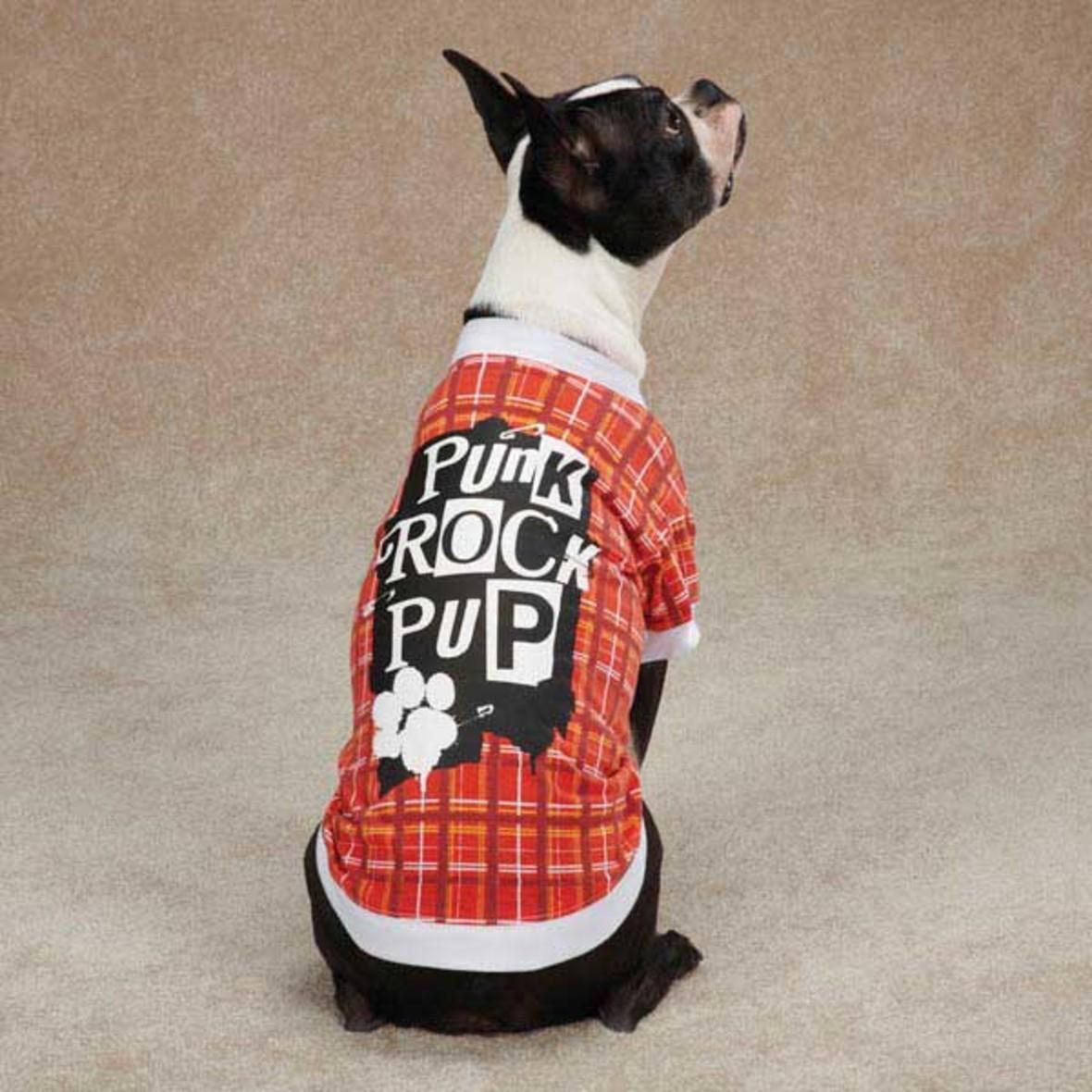 50 kotów i psów kochających punk rock