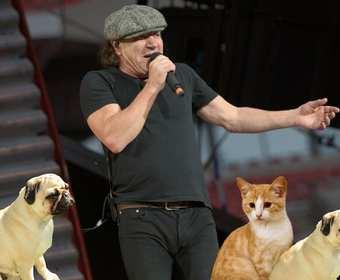 """""""Back in Black"""" AC/DC w zwierzęcym coverze"""