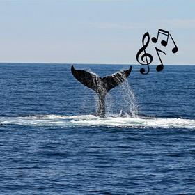 Wieloryb, który śpiewa