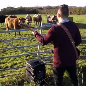 Czy krowy nie lubią gitary basowej?