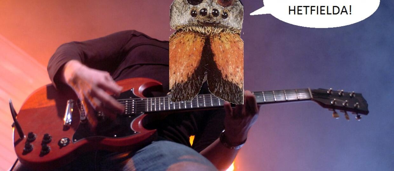 Czy pająki zastąpią gitarzystów?
