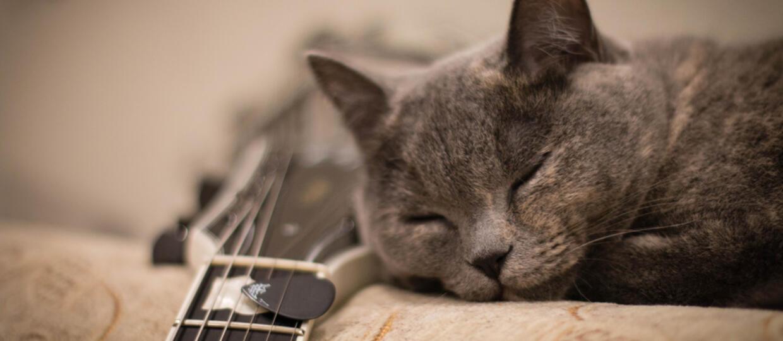 Międzynarodowy Dzień Kota: Rockowe utwory o kociakach, kiciach i kocurach
