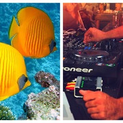 Ryby i muzyka klubowa
