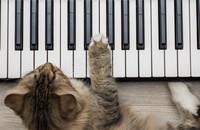 Muzyka stworzona dla kotów