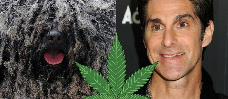 Pies Perry'ego Farrella z Jane's Addiction naćpał się marihuaną
