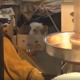 Pies lubi Iron Maiden