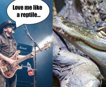 Prehistoryczny krokodyl nazwany na cześć Lemmy'ego