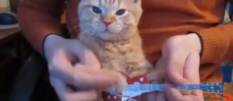 Szalone koty grają metal