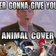 Utwór Ricka Astleya w zwierzęcym coverze