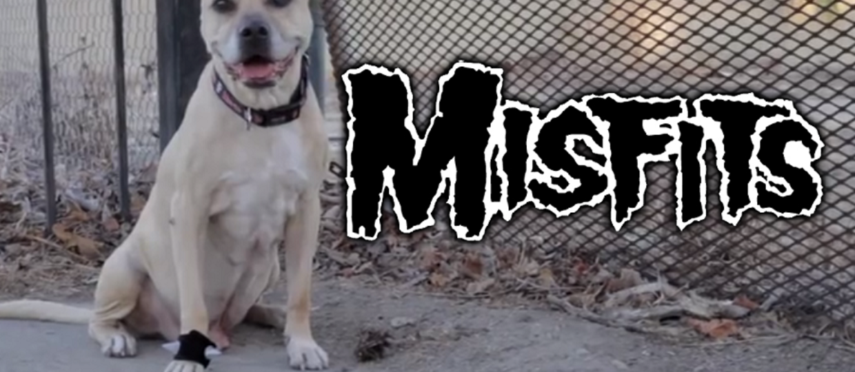 Kup psu obrożę z Misfits