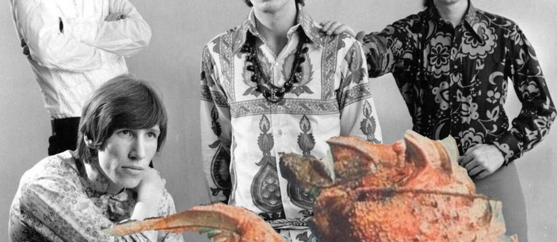 Mordercza krewetka nazwana po zespole Pink Floyd
