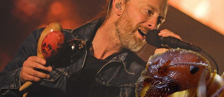 Nowy gatunek mrówki nazwany po Radiohead