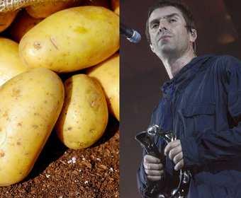 Obieranie ziemniaków na koncercie Liama Gallaghera