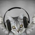 Spotify dla zwierząt
