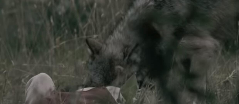 """Wilcza obława na kobietę w nowym teledysku Behemotha do """"Wolves ov Siberia"""""""