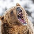 12-latek natknął się na niedźwiedzia