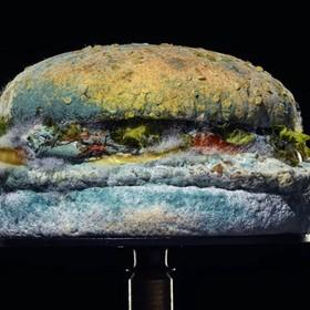 spleśniały burger