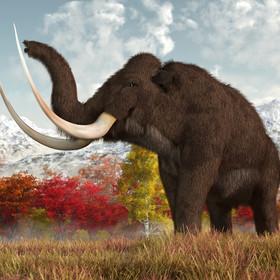 Ostatnie mamuty na Ziemi umierały w cierpieniu